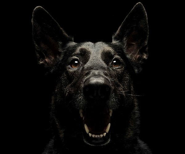 What do the different dog barking types mean?